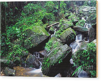 Rainforest Waterfall Wood Print by Thomas R Fletcher