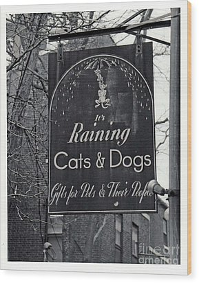Wood Print featuring the photograph Raining Cats And Dogs by Juls Adams