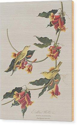 Rathbone Warbler Wood Print by John James Audubon