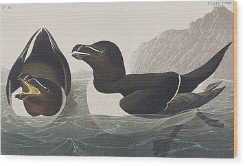 Razor Bill Wood Print