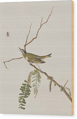 Red Eyed Vireo Wood Print by John James Audubon