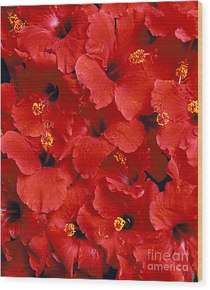 Red Hibiscus Wood Print by Tomas del Amo - Printscapes