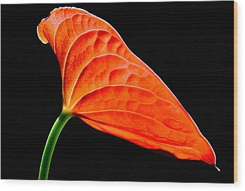 red Lily blossom Wood Print by Werner Lehmann