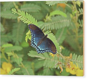 Wood Print featuring the photograph Red Spotted Purple Butterfly by Sandy Keeton