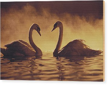 Romantic African Swans Wood Print by Brent Black - Printscapes