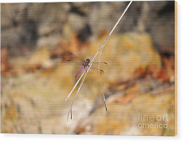 Wood Print featuring the photograph Fuchsia Fly by Al Powell Photography USA