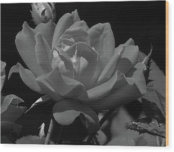 Rosey Bloom Wood Print