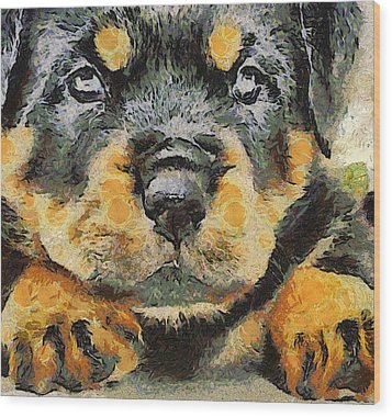 Rottweiler Puppy Portrait Wood Print by Tracey Harrington-Simpson