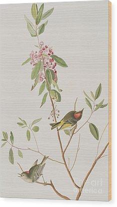 Ruby Crowned Wren Wood Print by John James Audubon