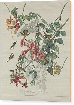 Ruby-throated Hummingbird Wood Print by Anton Oreshkin
