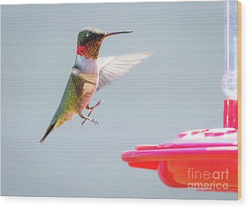 Wood Print featuring the photograph Ruby-throated Hummingbird  by Ricky L Jones