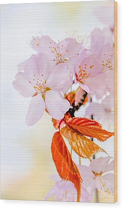 Wood Print featuring the photograph Sakura - Japanese Cherry Blossom by Alexander Senin