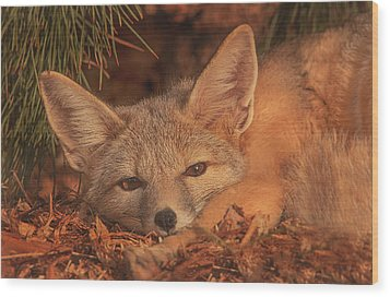 San Joaquin Kit Fox  Wood Print by Brian Cross