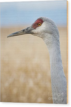 Sandhill Crane Wood Print by Chris Dutton