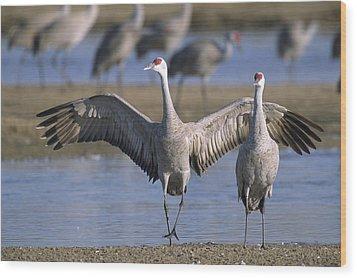 Sandhill Cranes Roost Along The Platte Wood Print by Joel Sartore