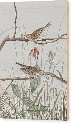 Savannah Finch Wood Print by John James Audubon