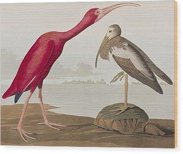 Scarlet Ibis Wood Print by John James Audubon