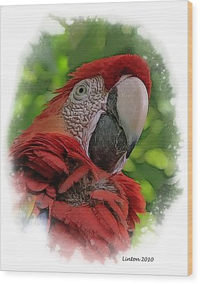 Scarlet Macaw Wood Print by Larry Linton