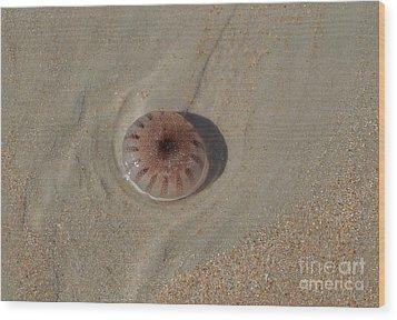 Sea Creatures Wood Print