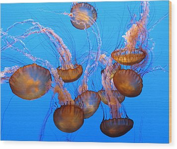 Sea Nettles Ballet 1 Wood Print by Diane Wood