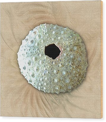 Wood Print featuring the photograph Sea Urchin by Anastasiya Malakhova