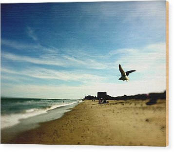 Seagulls At The Beach. Wood Print by Carlos Avila