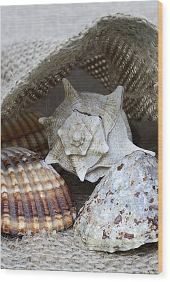 Seashells Wood Print