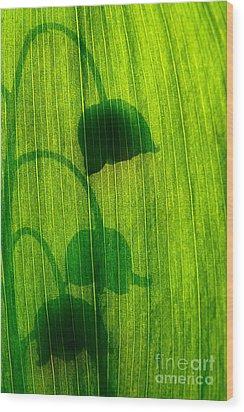 Shadow Wood Print by Odon Czintos
