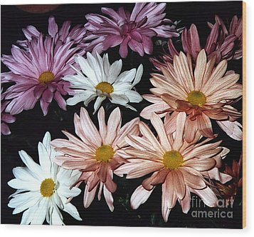 Wood Print featuring the photograph Shasta Daisies by Merton Allen