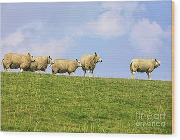 Wood Print featuring the photograph Sheep On Dyke by Patricia Hofmeester