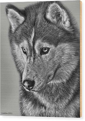 Siberian Husky 2 Wood Print