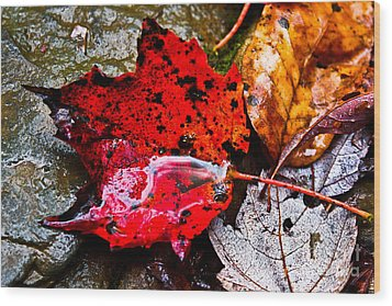 Signs Of Autumn Wood Print by Everett Houser