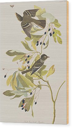 Small Green Crested Flycatcher Wood Print by John James Audubon