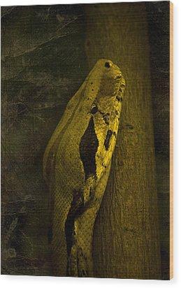 Snake Wood Print by Svetlana Sewell