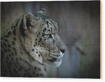 Wood Print featuring the photograph Snow Leopard by Roger Mullenhour