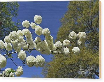 Wood Print featuring the photograph Snowballs by Skip Willits