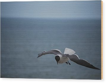 Wood Print featuring the photograph Soaring by Debbie Karnes