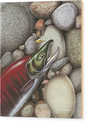 Sockeye Salmon Wood Print by JQ Licensing