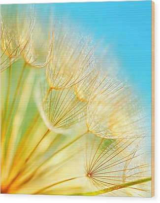 Soft Dandelion Flowers Wood Print