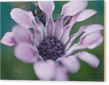 Wood Print featuring the photograph Soft Purple by Michaela Preston