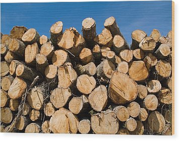 Stack Of Wooden Logs In The Landes Forest Wood Print by Sami Sarkis