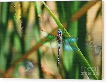 Stained Glass Dragonfly Wood Print