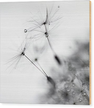 Standing Tall Wood Print by Rebecca Cozart
