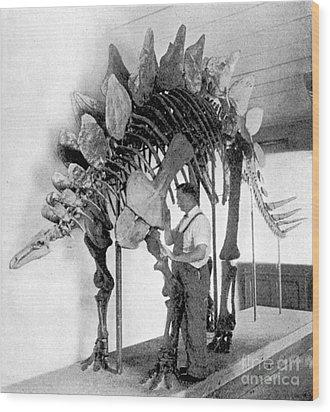 Stegosaurus Wood Print by Science Source
