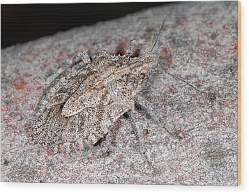Wood Print featuring the photograph Stink Bug by Breck Bartholomew