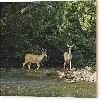 Stream Crossing Wood Print