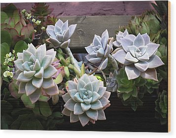 Succulents Wood Print by Catherine Lau