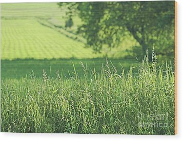 Summer Fields Of Green Wood Print by Sandra Cunningham