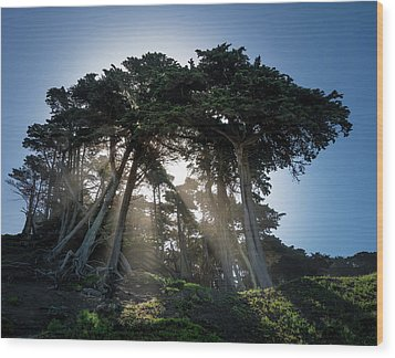 Sunbeams From Large Pine Or Fir Trees On Coast Of San Francisco  Wood Print by Steven Heap