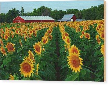 Sunflower Field #4 Wood Print